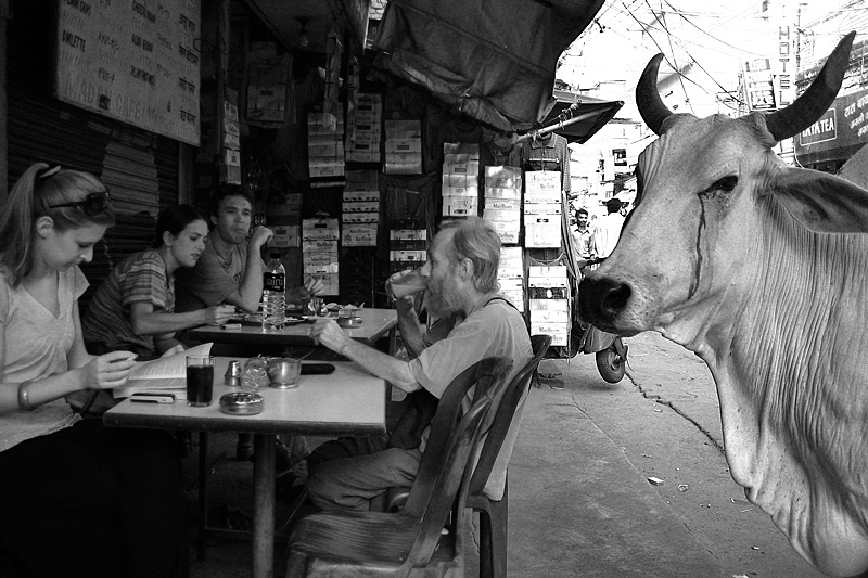 A street cow approaches an outdoor restaurant in Paharganj. - Delhi, India - Daily Travel Photos