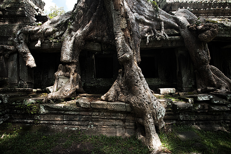 The roots of a tree branch over the ruins of Angkor Wat's Preah Khan temple complex. - Siem Reap, Cambodia - Daily Travel Photos