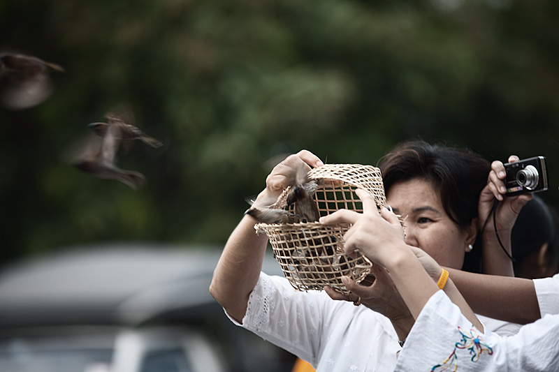 Birds are freed by tradition for Thai new year, Songkran. - Chiang Mai, Thailand - Daily Travel Photos