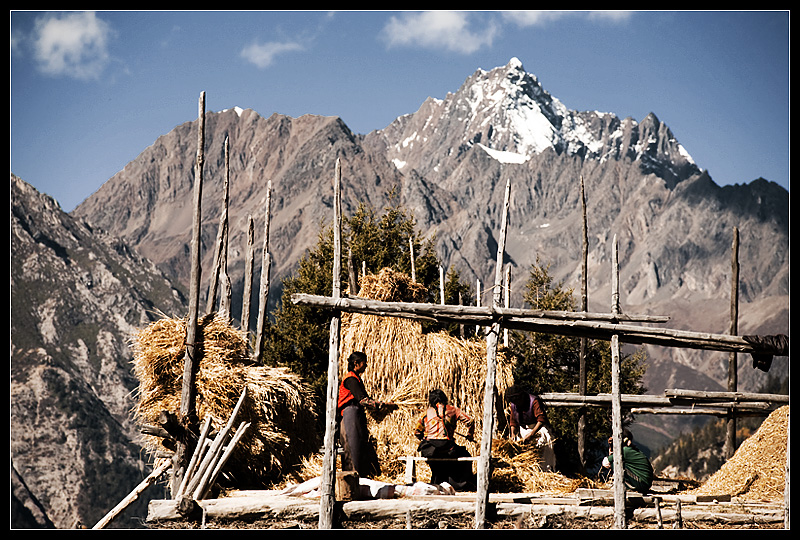 Tibetans prepare hay for the upcoming winter. - Ranwu, Tibet - Daily Travel Photos