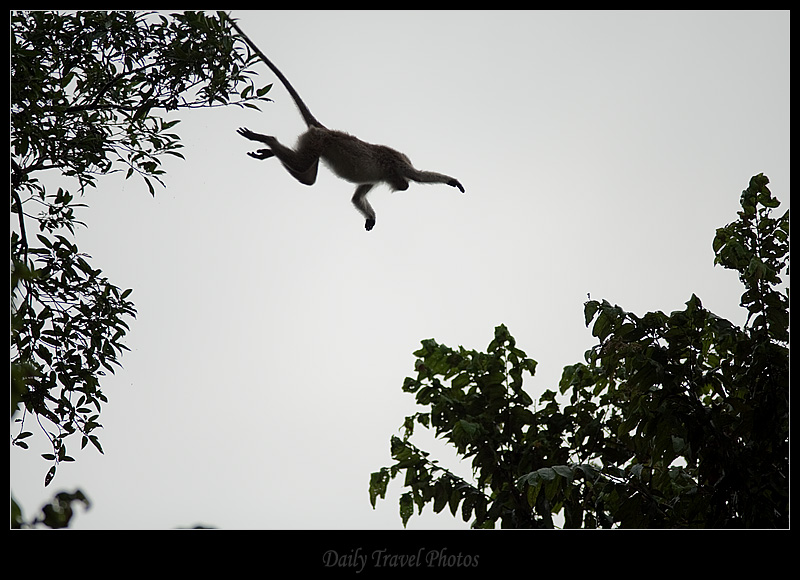 Outstretched arm of a jumping monkey - Sungei Kinabatangan, Borneo, Malaysia  - Daily Travel Photos