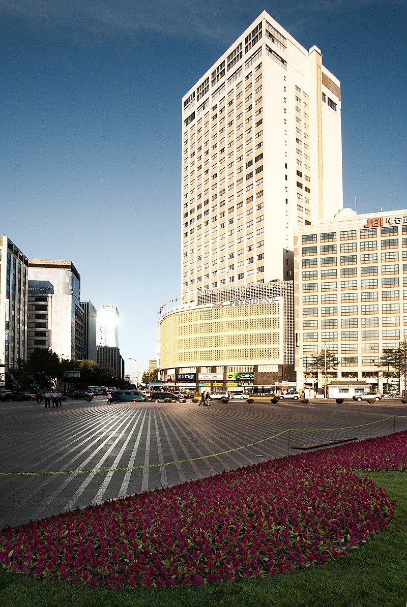 Seoul Plaza Downtown Purple Flowers - Seoul, South Korea - Daily Travel Photos