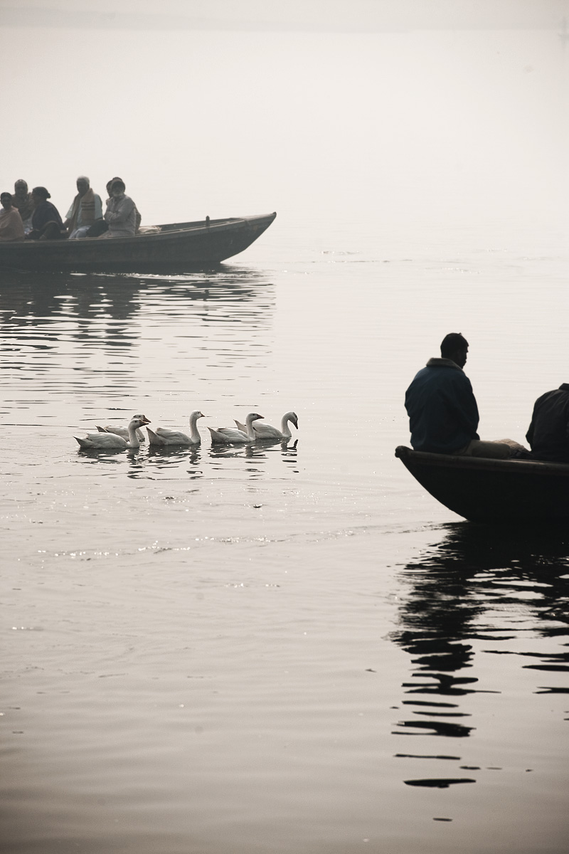 Ganges Boat Ride Pilgrims Morning Geese - Varanasi, Uttar Pradesh, India - Daily Travel Photos