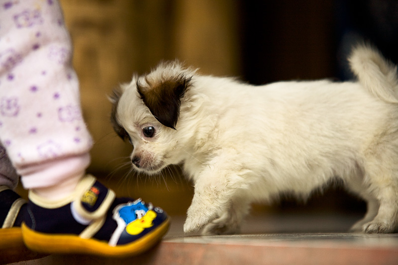 Puppy Baby Feet Shoes Curious - Fenghuang, Hunan, China - Daily Travel Photos