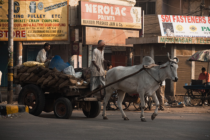 Bullock Cart Transportation Goods Merchandise - Delhi, India - Daily Travel Photos