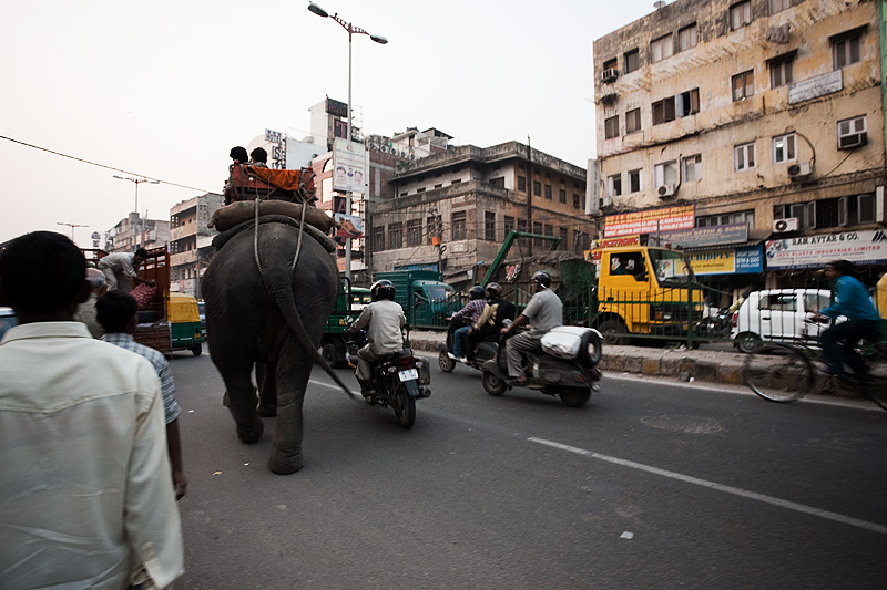 Traffic moves around the larger object, an elephant with its mahout handler.  - Delhi, India - Daily Travel Photos