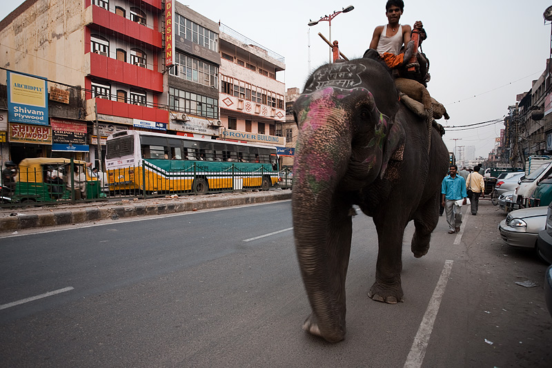 An elephant with mahout driver walks down a street as part of traffic. - Delhi, India - Daily Travel Photos