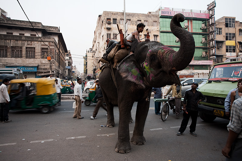 An elephant and mahout rest on the side of a downtown street. - Delhi, India - Daily Travel Photos