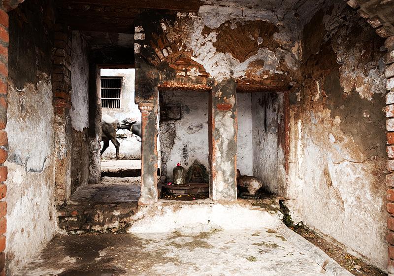 Cows pass a worn building housing an altar and lingam. - Mathura, Uttar Pradesh, India - Daily Travel Photos