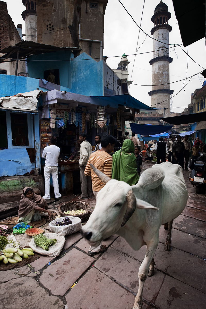 A cow with crooked horns walks out of the vegetable market in the bazaar. - Mathura, Uttar Pradesh, India - Daily Travel Photos