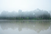 Jungle Morning (Kinabatangan River Part II) Photo: Morning mist over the banks of the Kinabatangan River.