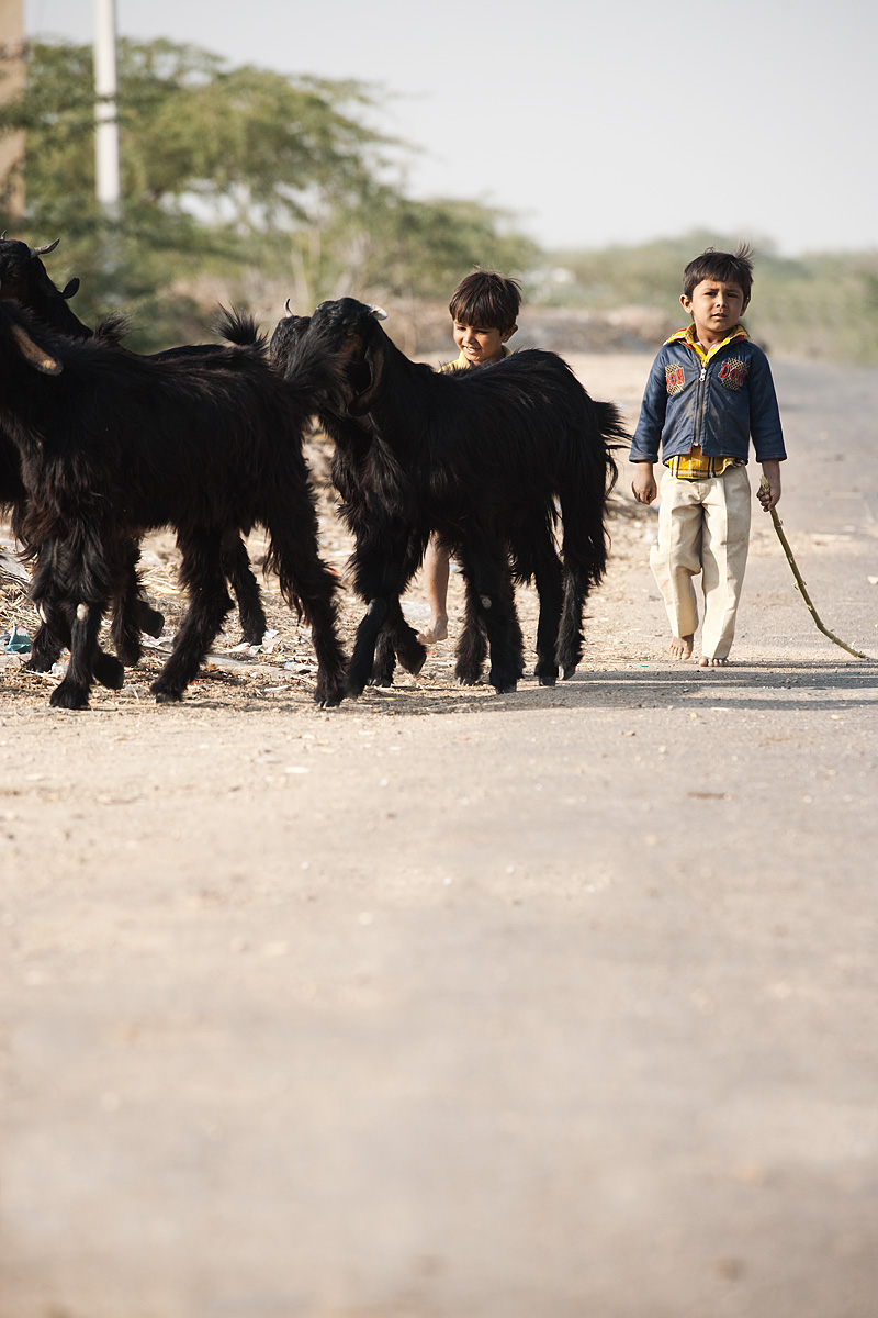 Tiny shoe-less goat herders tend to their flock.  - Khuri. Rajasthan, India - Daily Travel Photos