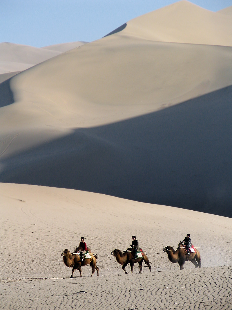 Chinese tourists take some hairy camels out for a spin. - Dunhuang, Gansu, China - Daily Travel Photos