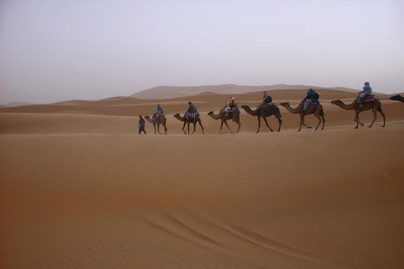 A caravan of western tourists on a two-day camel safari. - Sahara Desert, Morocco - Daily Travel Photos