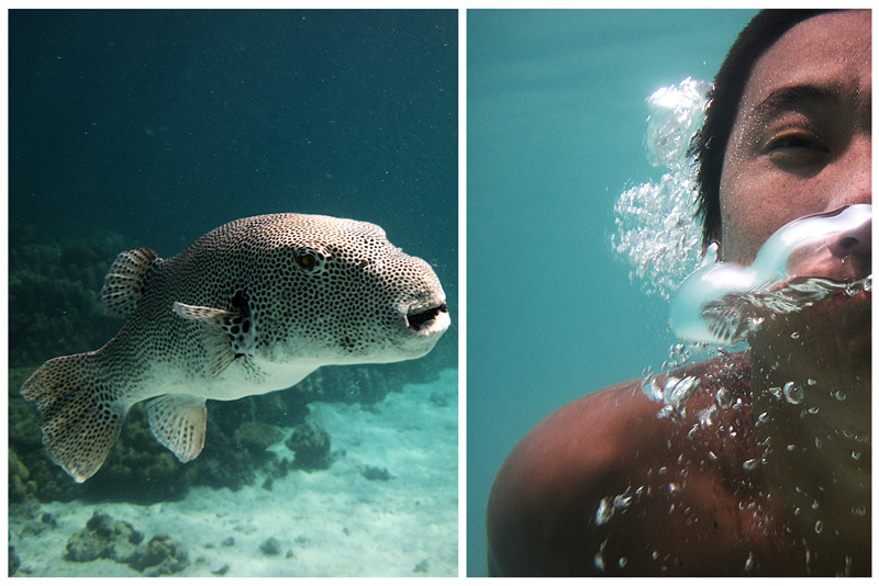 A diptych of a puffer fish and a travel guy (your's truly) underwater. - Ko Lipe, Thailand - Daily Travel Photos