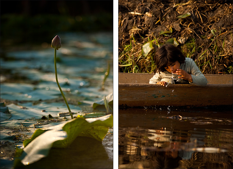A diptych of a blooming lotus and a young Kashmiri girl washing her face on Dal Lake. - Srinagar, Kashmir, India - Daily Travel Photos