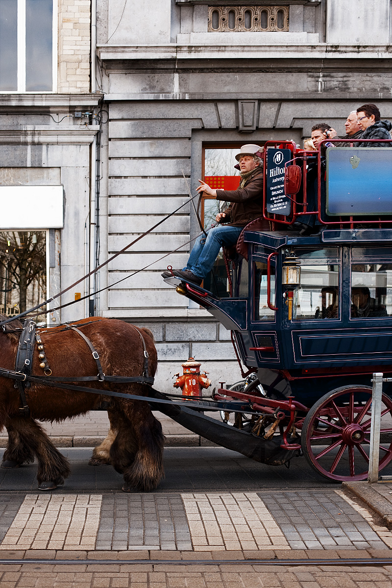 A tourist coach driver gestures as he steers a pair of Clydesdale workhorses. - Antwerp, Belgium - Daily Travel Photos