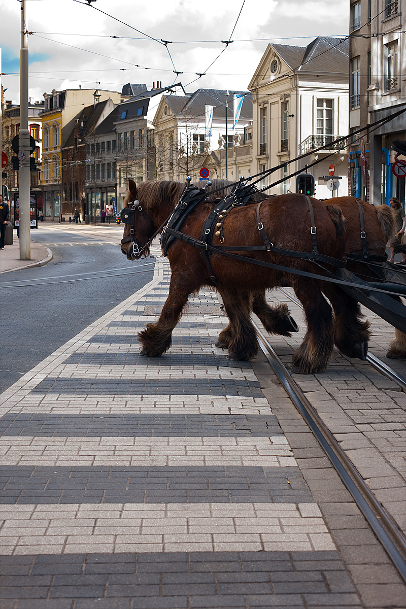 A pair of Clydesdale horses pull a tourist carriage across the tram tracks near Groenplaats. - Antwerp, Belgium - Daily Travel Photos