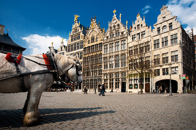 Carriage pulling horses rest in front of the guild houses at Grote Markt. - Antwerp, Belgium - Daily Travel Photos