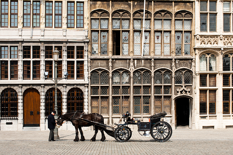A horse is fed by the driver of the tourist buggy in front of the guild houses. - Antwerp, Belgium - Daily Travel Photos