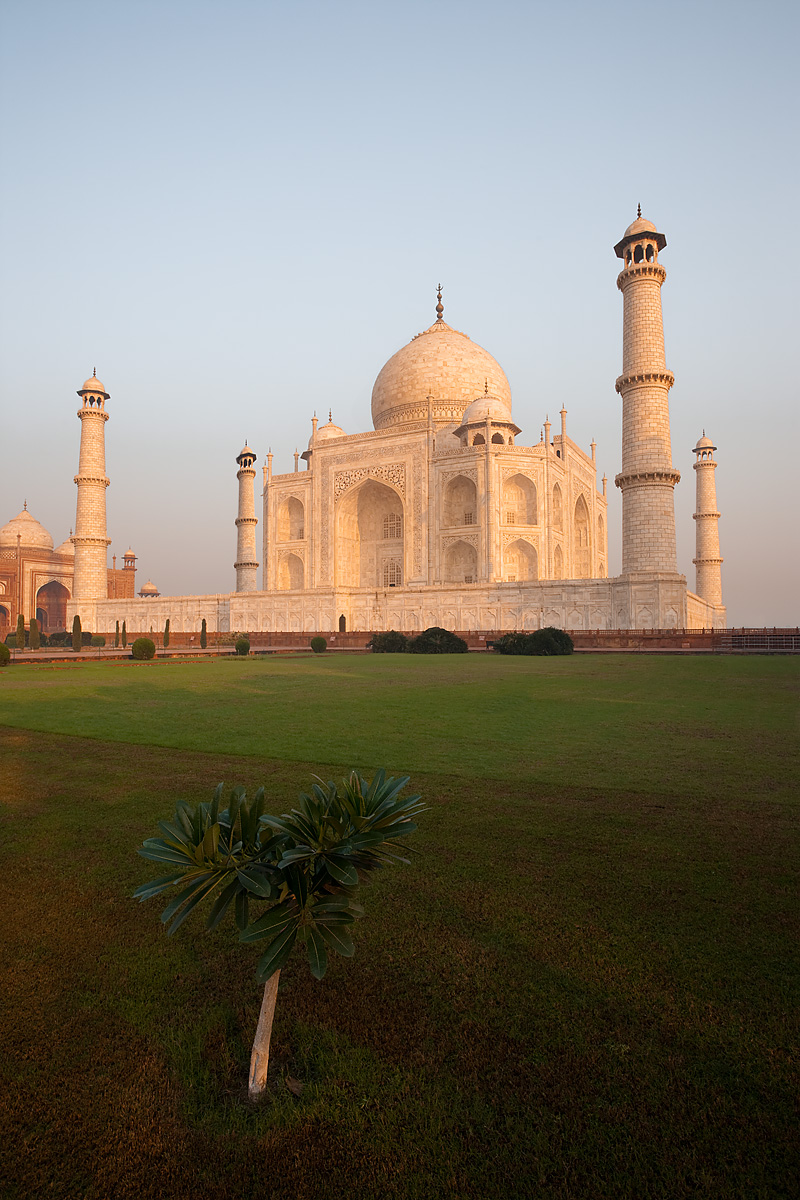 A solitary tree accompanies the Taj Mahal at sunrise. - Agra, Uttar Pradesh, India - Daily Travel Photos