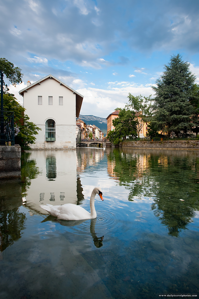 Swan wading around historic city center canal. - Annecy, France - Daily Travel Photos