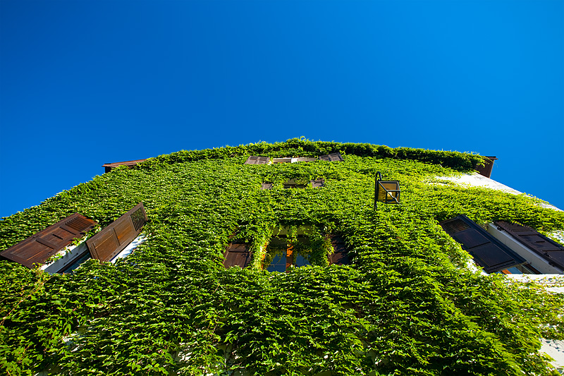 Ivy covered house near on Castle hill - Annecy, Haute-Savoie, France - Daily Travel Photos