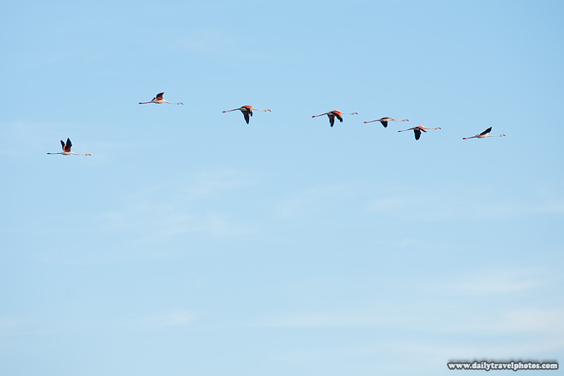 Flying flamingos - Sainte Marie De La Mer, Camargue, France - Daily Travel Photos