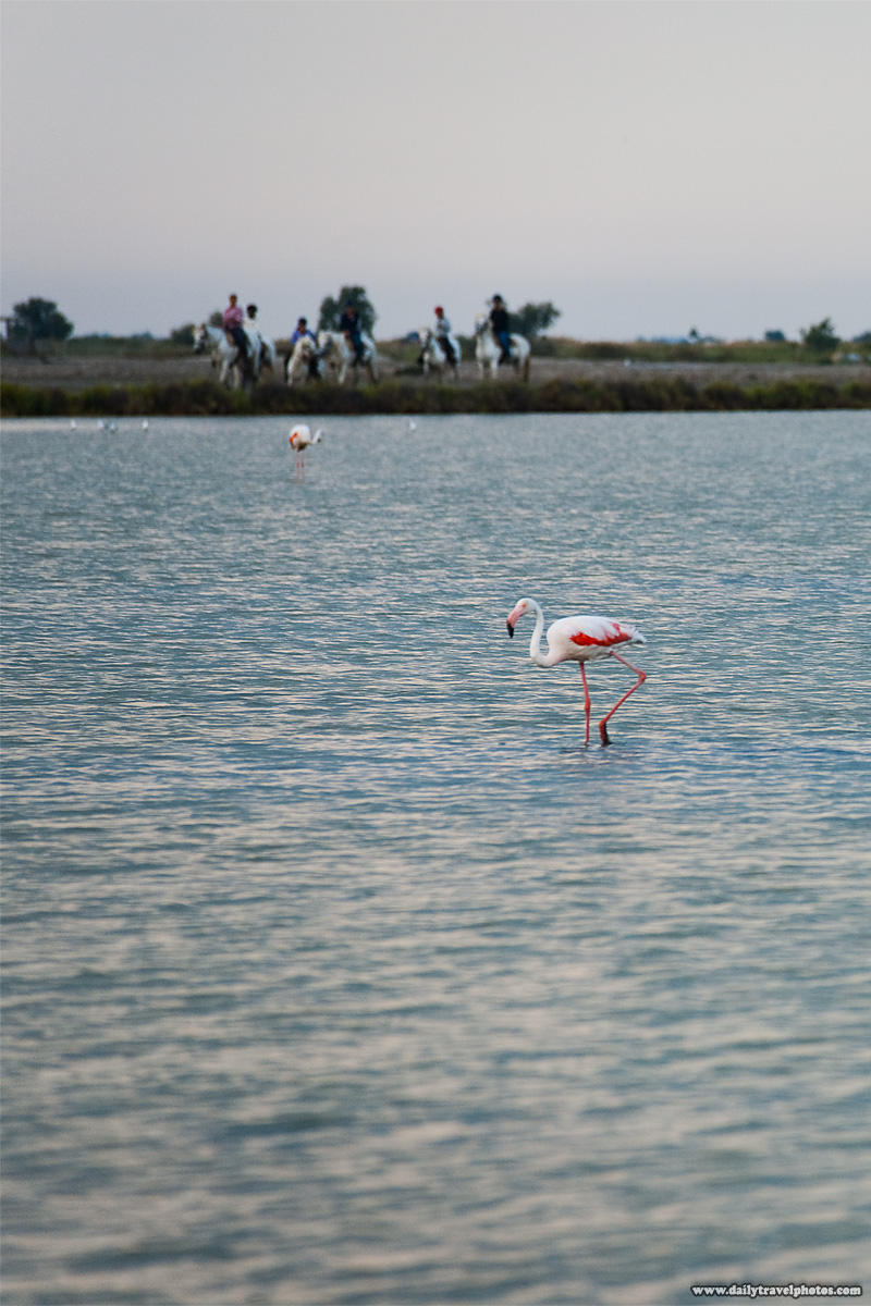 Flamingos and horseback riders - Sainte Marie De La Mer, Camargue, France - Daily Travel Photos