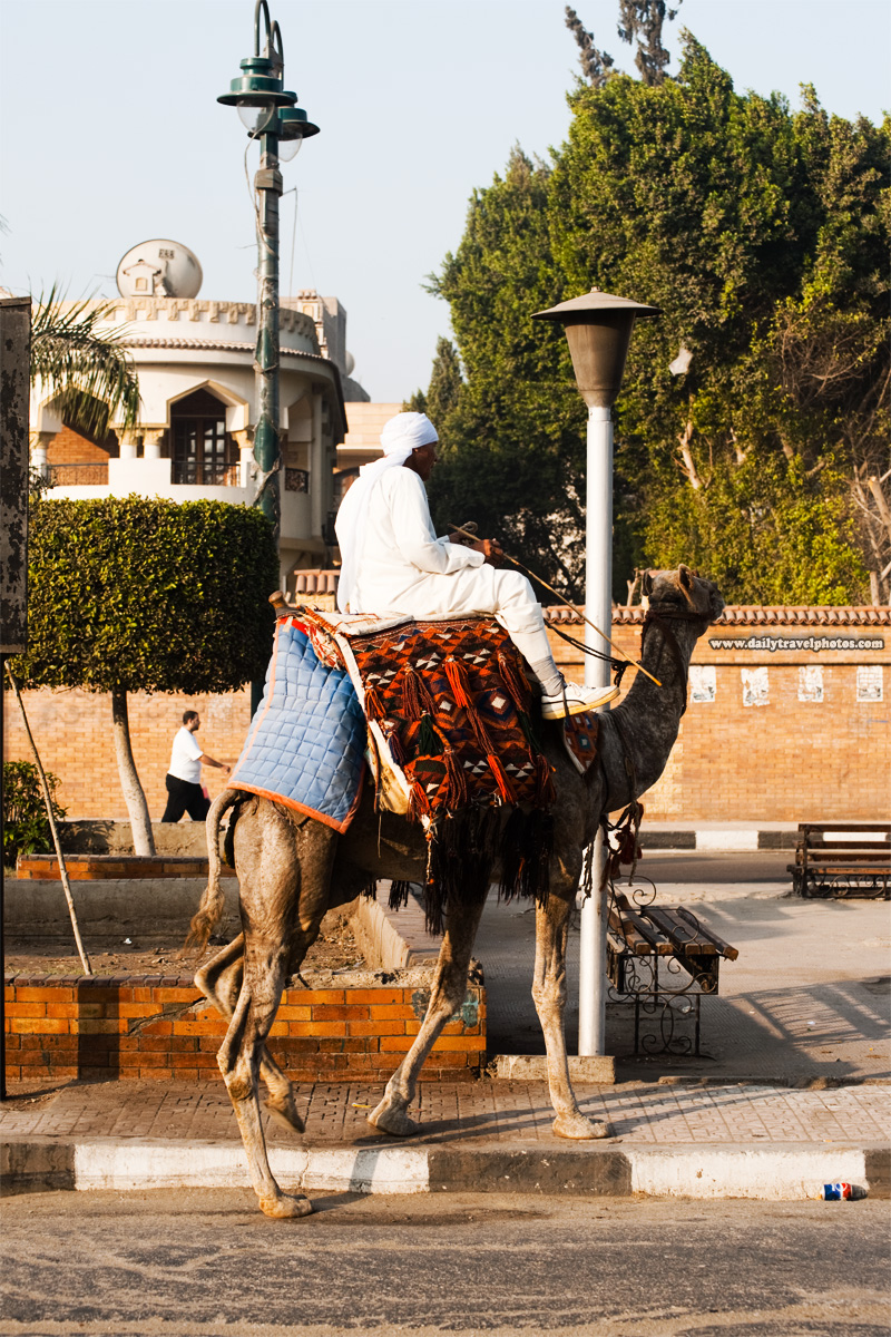 A camel tout rides his way to work at the pyramids of Giza - Cairo, Egypt - Daily Travel Photos