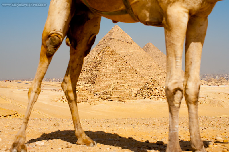 Pyramids Framed Camels Legs - Cairo, Egypt - Daily Travel Photos