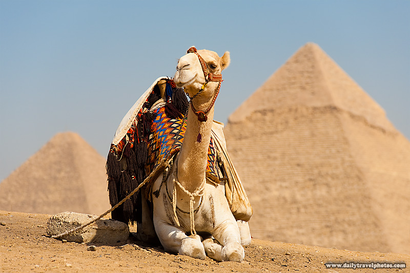 Camel Pyramids Official Viewpoint - Cairo, Egypt - Daily Travel Photos