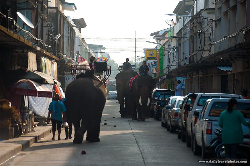 Elephants Walking Street City Urban - Surin, Isaan, Thailand - Daily Travel Photos