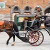 Buggied Out Photo: A tourist horse and buggy glide past the belfry on Grote Markt.