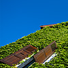 Weed Wall Photo: An ivy covered house on castle hill in old Annecy.