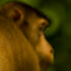 Naughty Nethers Photo: A macaque displays his brightly colored buttocks (archived photos, on the weekends).