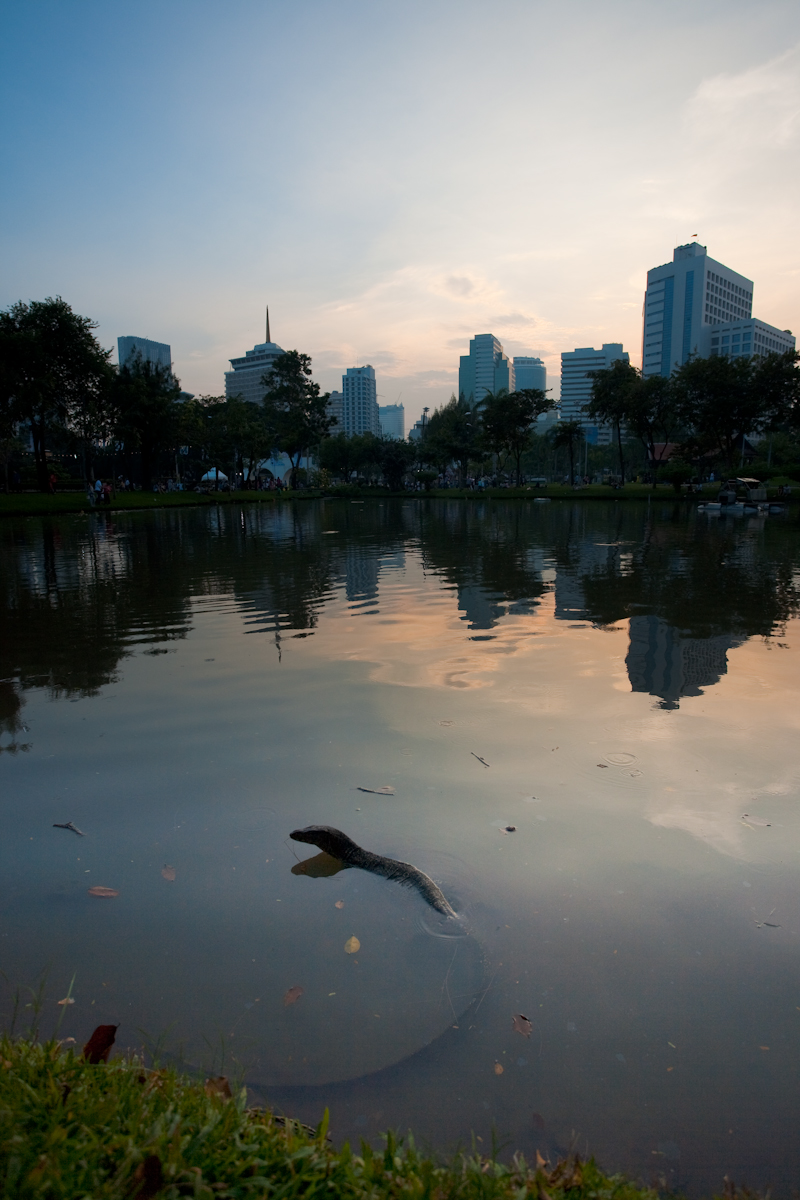 Monitor Lizard Swimming Lumphini Park Downtown - Bangkok, Thailand - Daily Travel Photos