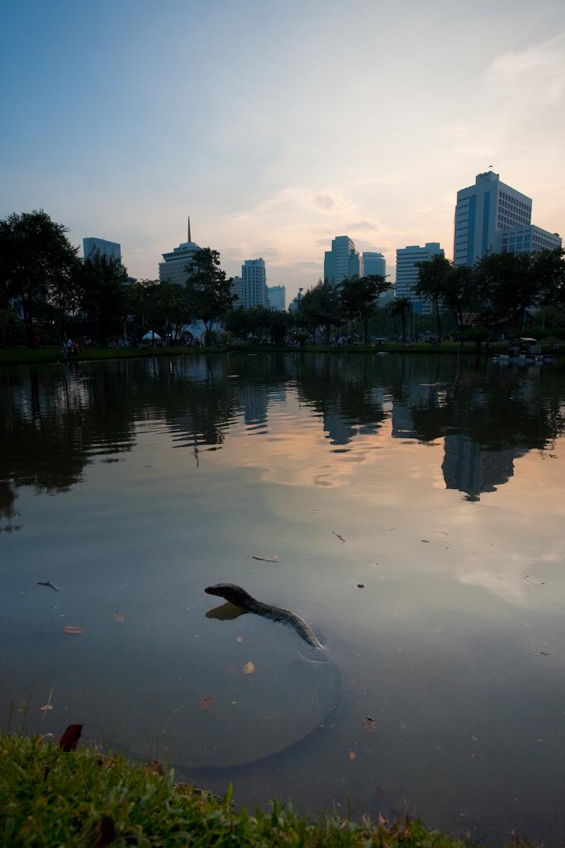 Monitor Lizard Swimming Lumphini Park Downtown - Bangkok, Thailand - Daily Travel Photos