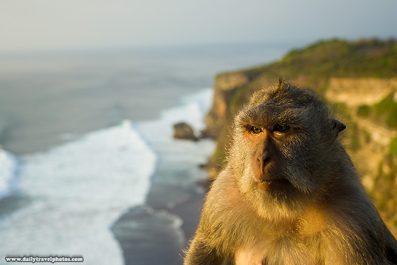Monkey Cliffs Beach Waves Ocean - Uluwatu, Bali, Indonesia - Daily Travel Photos