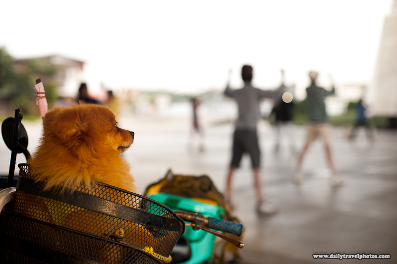 Dog Bicycle Basket Waiting Aerobics Owner - Bangkok, Thailand - Daily Travel Photos