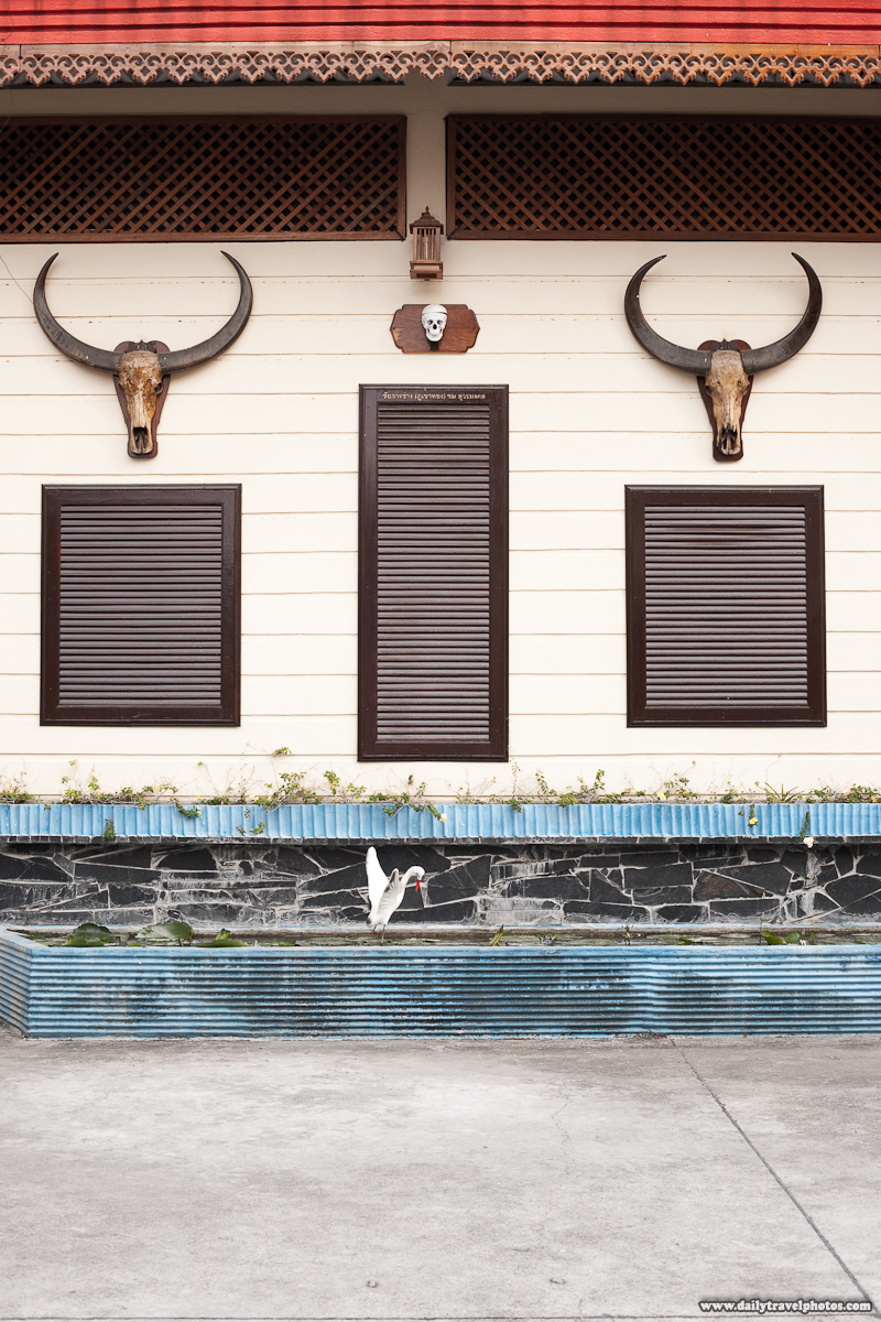 Water Buffaloes Skulls and a Model Human Skull Attached to Crematorium Building - Bangkok, Thailand - Daily Travel Photos