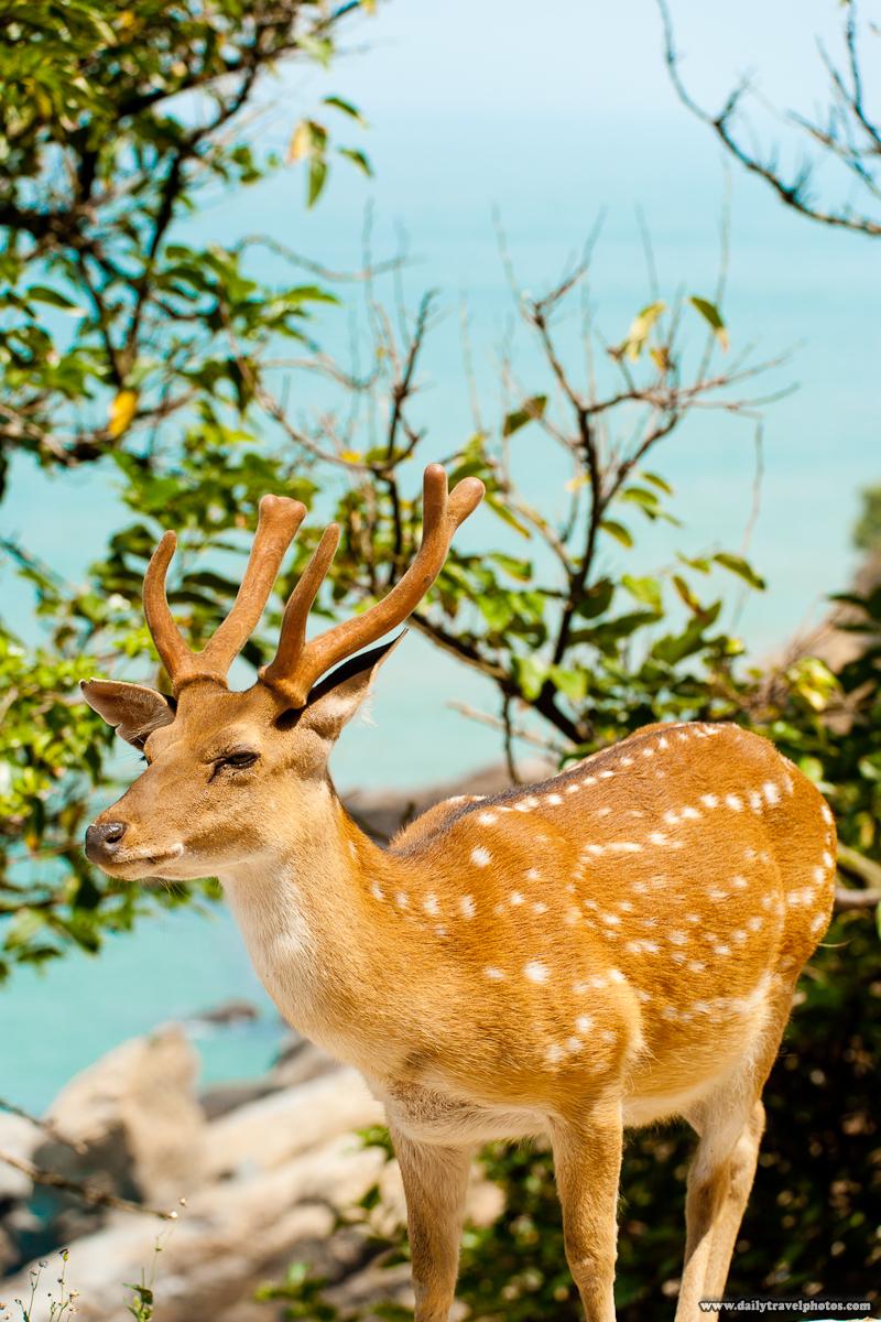 Formosan Sika Deer Antlers Cliff Edge - Daqiu, Matsu Islands, Taiwan - Daily Travel Photos
