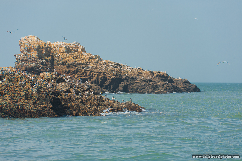 Rocky Islet Full of Birds for Watching Tern - Daqiu, Matsu Islands, Taiwan - Daily Travel Photos
