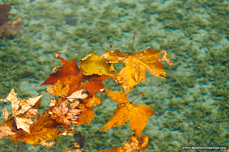 Leaves Floating on Top of Water of Annecy Lake - Annecy, Haute-Savoie, France - Daily Travel Photos